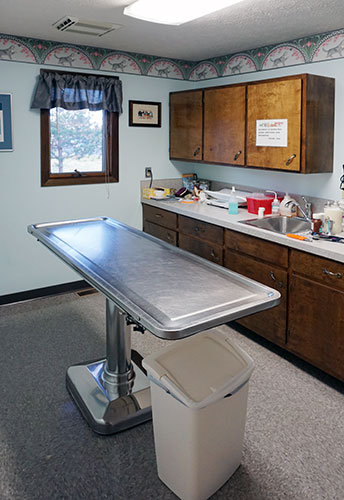 our feline examination room