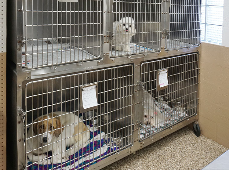 hospital and kennel area