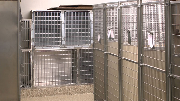indoor kennel area