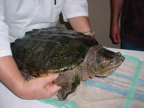 tortoise... one of our many patients