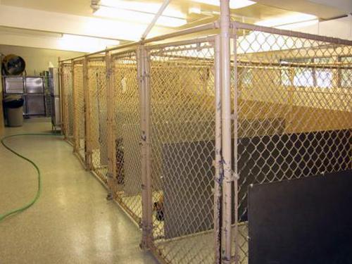 indoor runs in kennel area