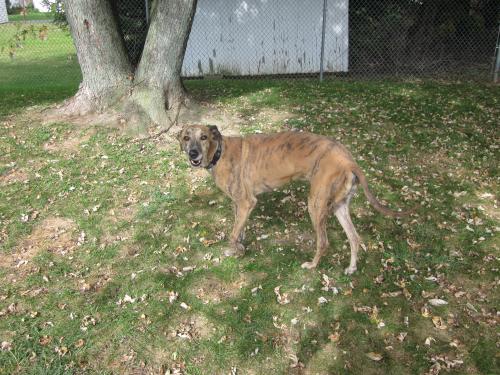 dan our clinic dog enjoying fresh air