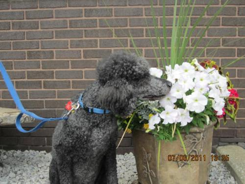 moochie taking time to smell the flowers