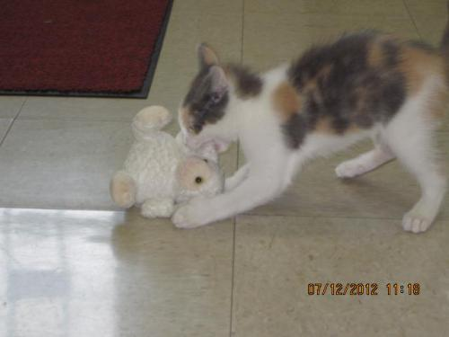 aspen attacking her toy