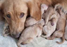reproduction in pets